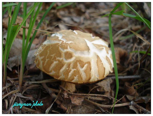蘑菇party