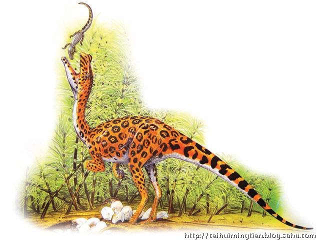 古动物馆去看一看,从身长不足1米的鹦鹉嘴龙到身长达22米的马门溪龙