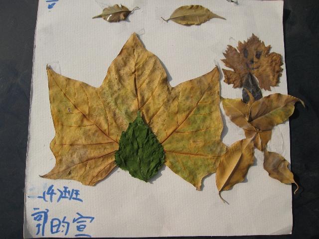 创意画海底世界树叶粘贴画