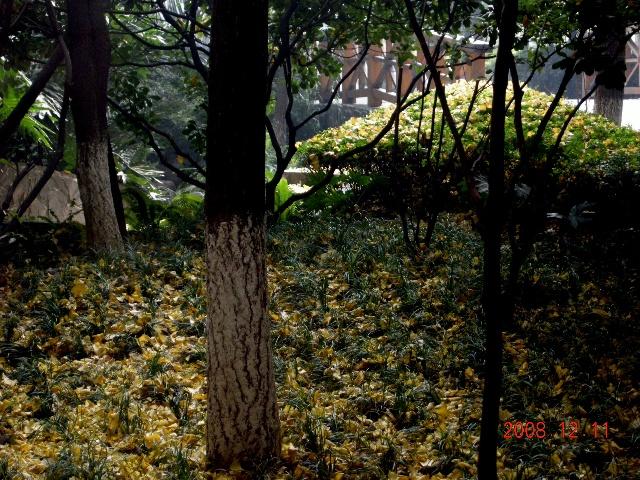 壁纸 风景 森林 桌面 640_480