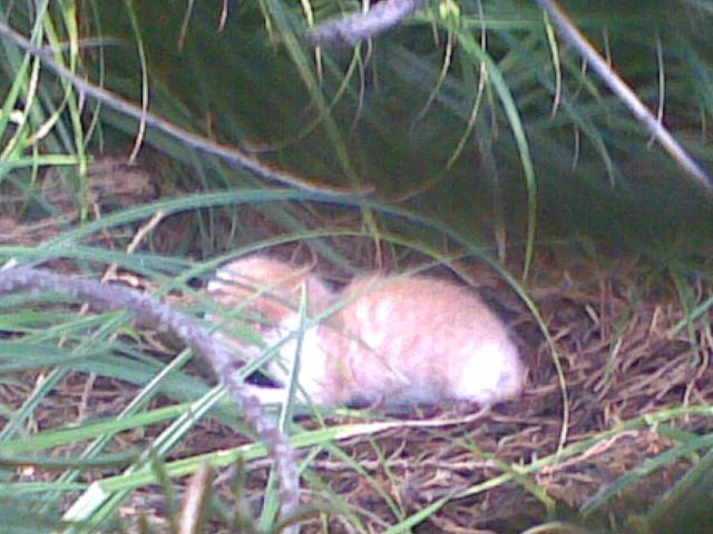 北海刚刚出生的小猫-北海遇泼妇图片