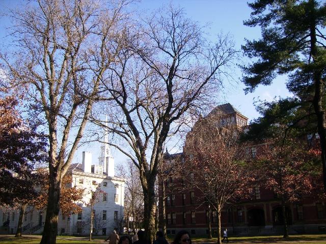 美丽如画的哈佛大学校园风景