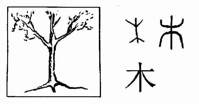"""象形字,读mù。由一棵上面长着树枝下面带着树根的树木演变而来的象形字;用来组成木本植物名字,或用木料做成的东西。组字:""""林""""""""森""""""""植""""""""树""""""""枝""""""""根""""""""材""""""""松""""""""柏""""""""梅""""""""桃""""""""椅""""""""村"""