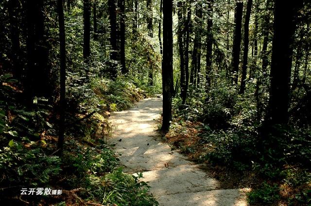 壁纸 风景 森林 桌面 640_425