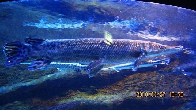 出洞,出动,富国海底世界见识很多鱼 视频
